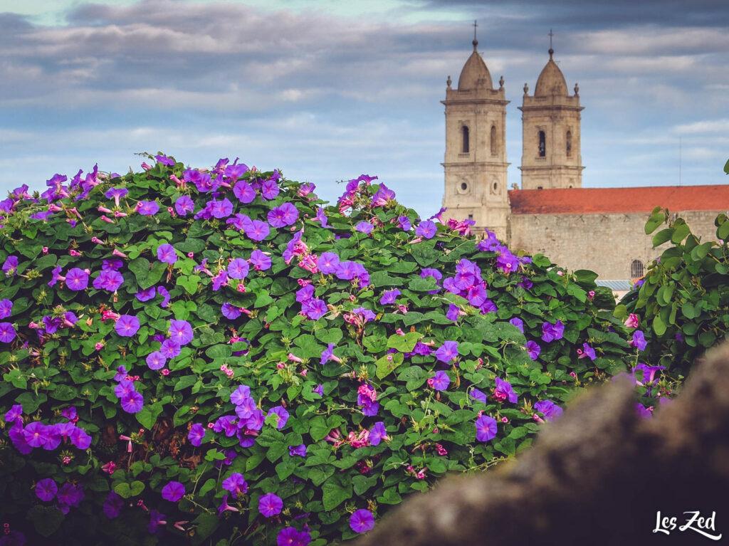 Porto - Igreja da lapa