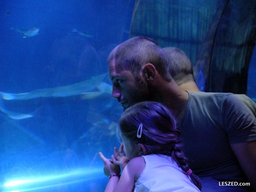 Max et Chloé admirent les requins