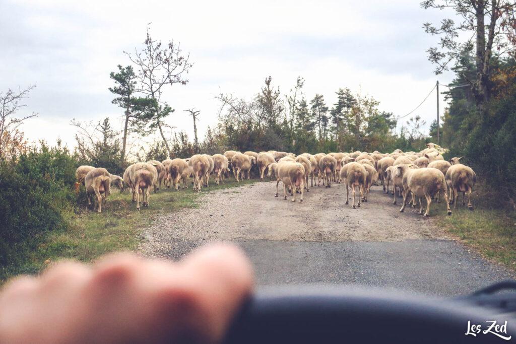 Embouteillage en Lozère