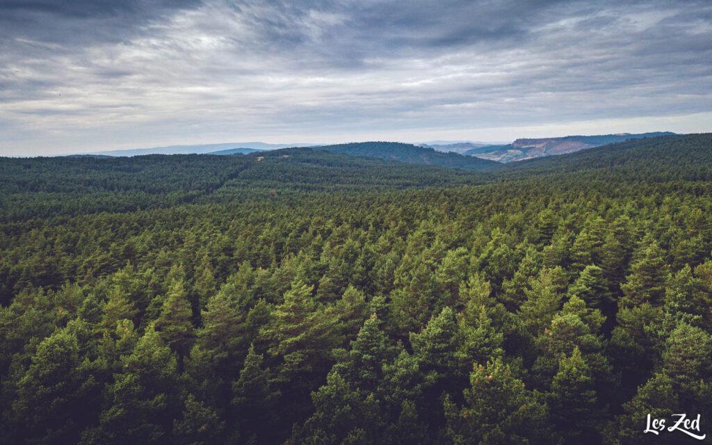 Paysage de Lozère : forêt des Causses