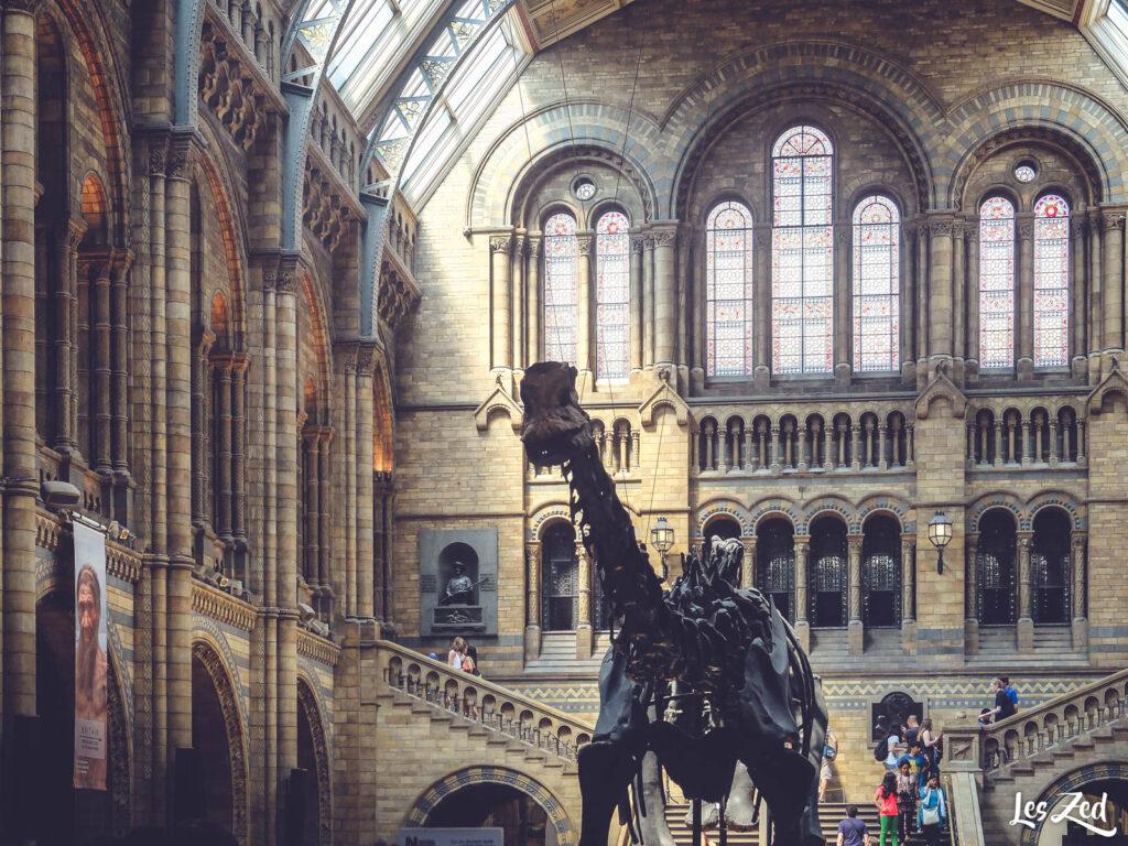 Musée d'histoire naturelle (intérieur)